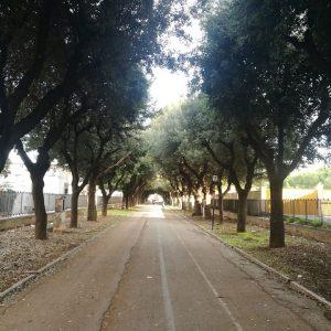 Angarano restituisce il Cimitero ai biscegliesi, riapertura da sabato 2 maggio