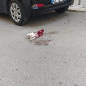 I cani randagi del quartiere Seminario vanno fermati