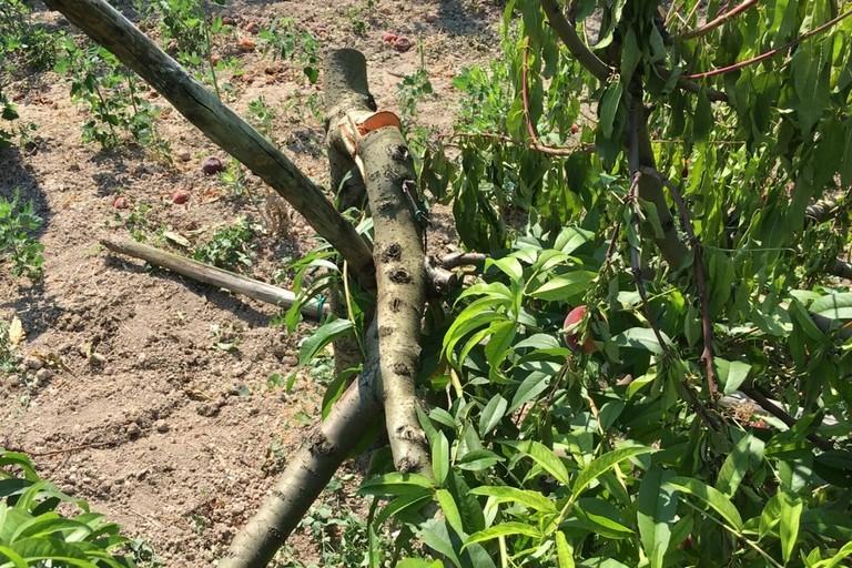"""Danneggiamenti delle coltivazioni nel nord-barese, Galantino (FdI) interroga il Governo: """"subito provvedimenti"""""""